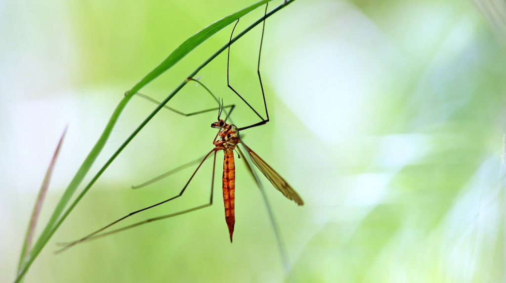 комары в природе картинки истинный мотив